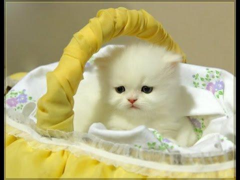 صور خلفيات قطط , احدث خلفيات القطط