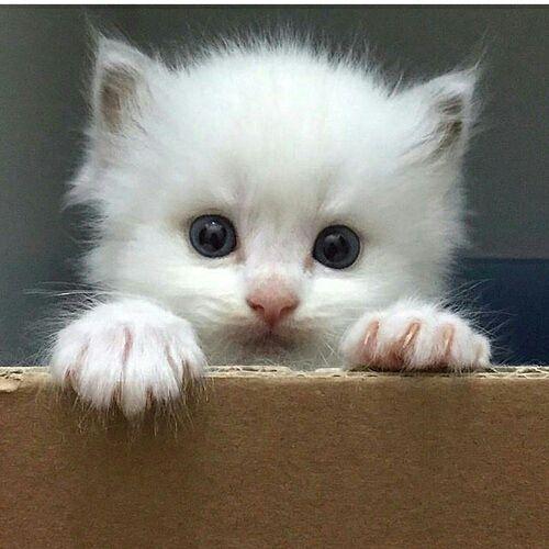 صور صور قطط صغيرة , افضل صور قطط صغيرة