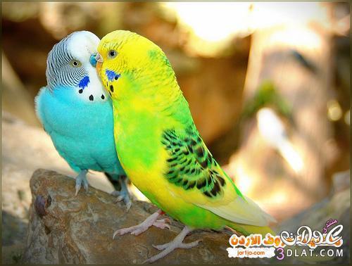 صور صور عصافير , اجمل صور للعصافير