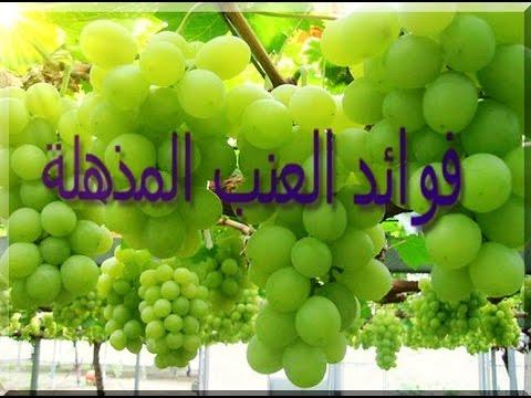 صورة فوائد العنب , عن اهمية الفائدة للعنب
