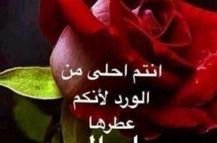 صورة كلمات عن الورد , الورود ترسم البسمه علي الانسان