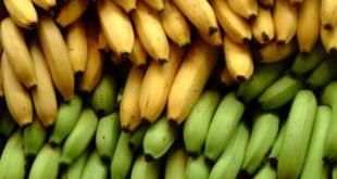 صورة ماهي فوائد الموز , اكل الموز على الريق