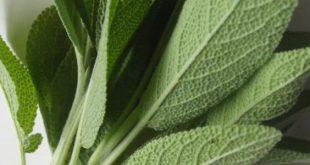 صور عشبة الميرمية , فوائد اعشاب الميرمية سبحان الله