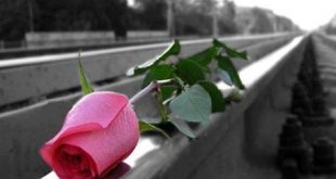 صورة عبارات عن الورد , لك باقة ورد اجمل ورد لاغلى ناس