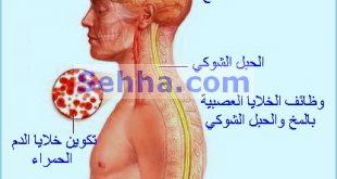 صورة اعراض نقص فيتامين ب 12 , كيفيه معرفه نقص فيتامين ب