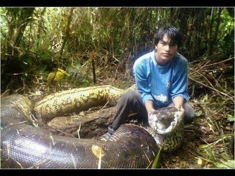صور اكبر ثعبان فى العالم , معلومات عن الثعبان الاكبر في العالم