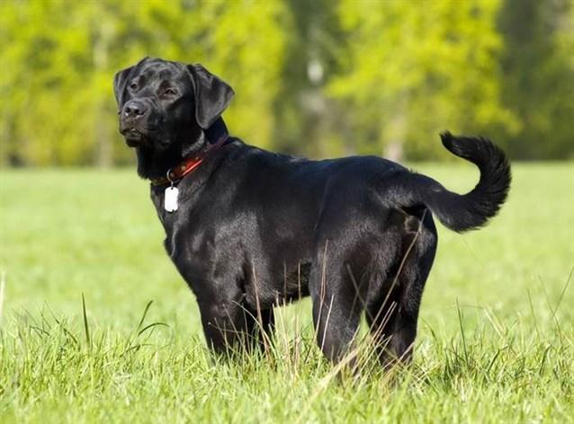 صور تفسير حلم كلب اسود , ماهو تفسير حلم كلب اسود