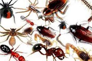 صور طرد الحشرات من المنزل بالقران , كيفية طرد الحشرات من المنزل بالقران