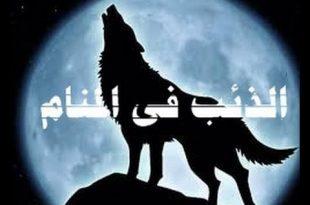 صورة رؤية الذئب الاسود في المنام , ما تفسير رؤية الذنب الاسود في المنام