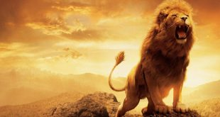 صور اكبر اسد على وجه الارض , تعرف على الحيوان الشرس