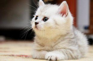 صور صور لقطط صغيرة , اجمل الصور القطط الجميله
