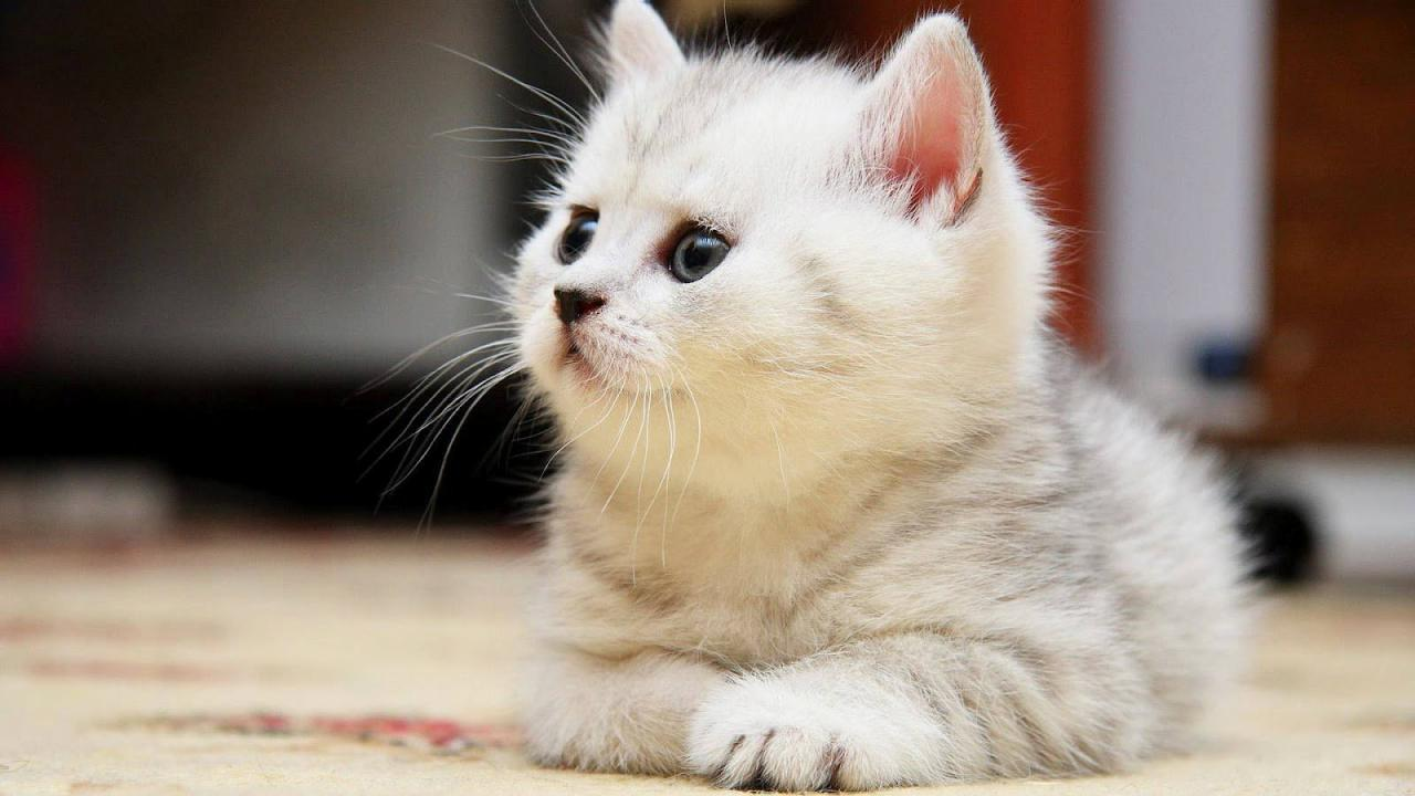 صورة صور لقطط صغيرة , اجمل الصور القطط الجميله
