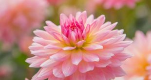 صورة ورود جميلة , ارق و احلي الازهار و المناظر الطبيعية