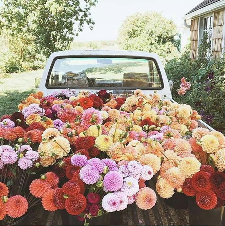 صورة ورد طبيعي , اجمل باقات الورد الطبيعي