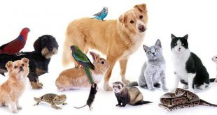 صورة حيوانات اليفة , ما لاتعرفه عن الحيوانات الاليفه من الالف للياء