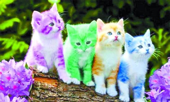 صورة صور قطط كيوت , شاهد صور قطط تثير دهشة الاطفال والكبار