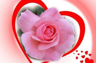 صورة اجمل ورود الحب, الرومانسيه يعني الورود