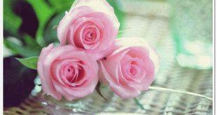 صورة ورد صور , الورد للرومانسيه والجمال